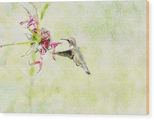 Humming Bird And Flower Wood Print