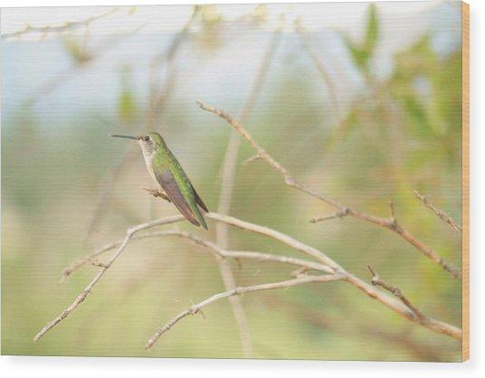 Humming Bird Perch Wood Print
