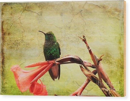 Hummingbird 1 Wood Print