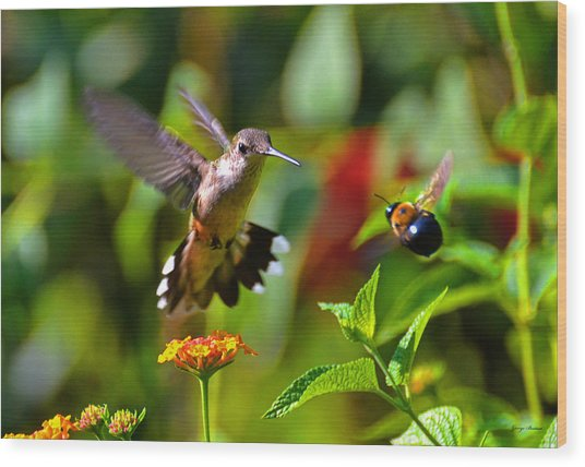 Hummingbird And A Bumblebee 001 Wood Print