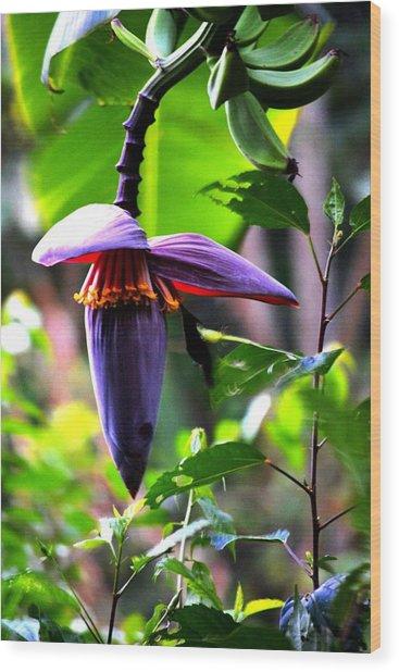 Hummingbird And Banana Tree Wood Print