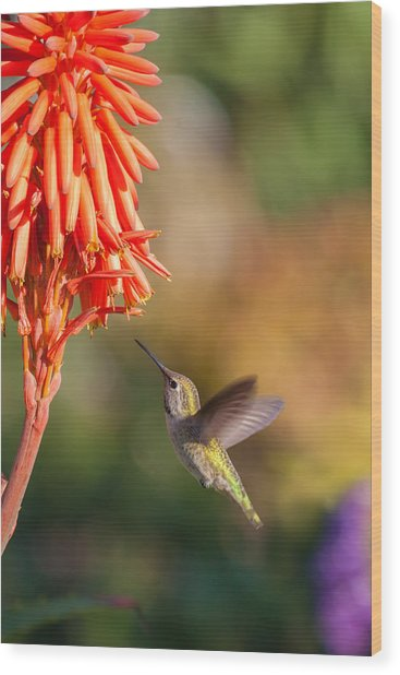 Hummingbird And Flower Wood Print