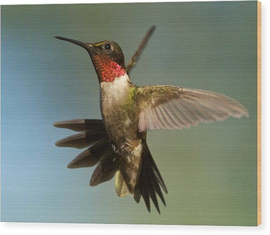 Hummingbird Beauty Wood Print