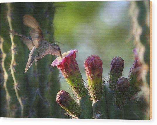 Hummingbird Breakfast Southwest Style  Wood Print