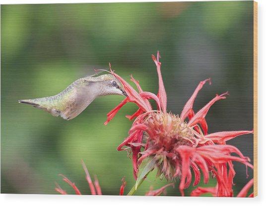Hummingbird Defying Gravity Wood Print