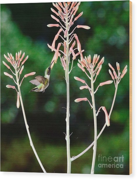 Hummingbird Emerald Green - Hummer Floats In Floral Glory Wood Print by Wayne Nielsen