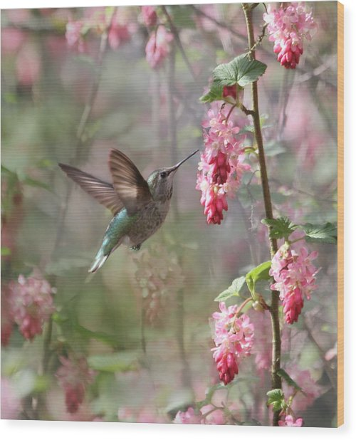 Hummingbird Heaven Wood Print
