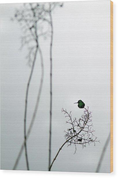Hummingbird In Fog 2 Wood Print