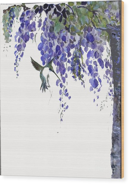 Hummingbird In Wisteria  Wood Print