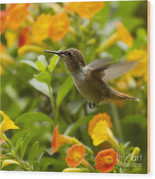 Hummingbird Looking For Food Wood Print