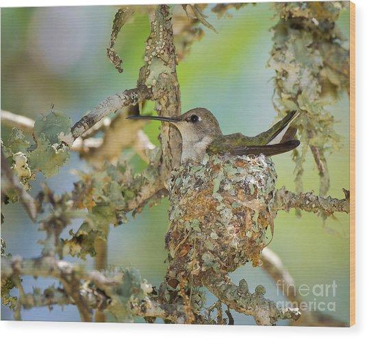 Hummingbird Nesting Wood Print