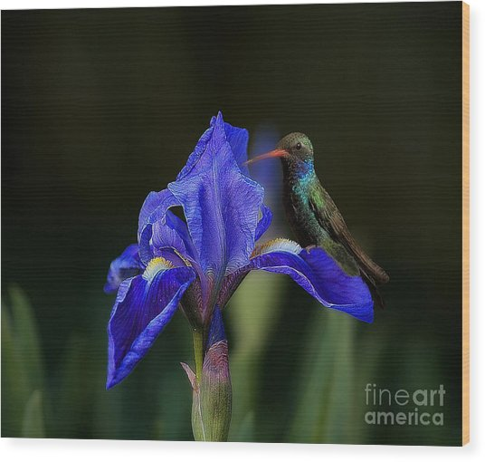 Hummingbird On A Mexican Blue Exotic Flower Wood Print