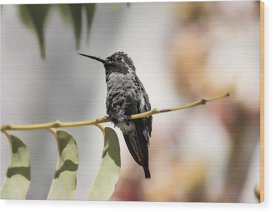 Hummingbird On Branch Wood Print