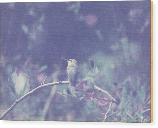 Hummingbird On Potato Vine Wood Print