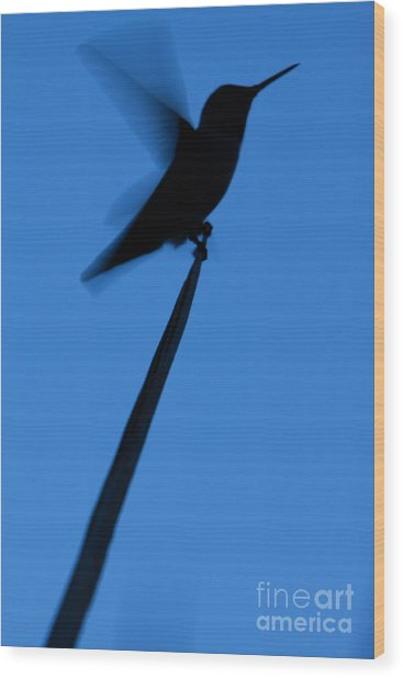 Wood Print featuring the photograph Hummingbird Silhouette by John Wadleigh