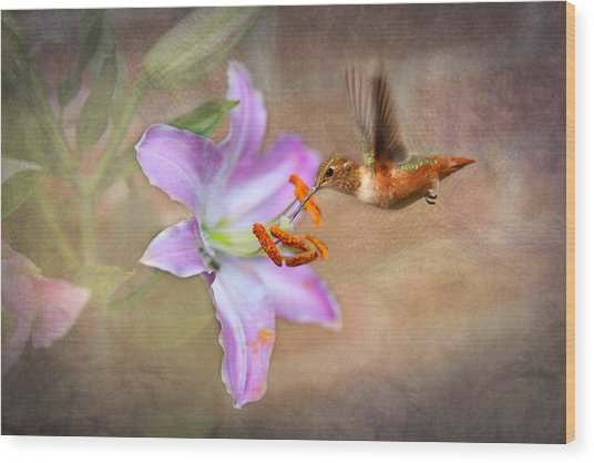 Hummingbird Sweets Wood Print