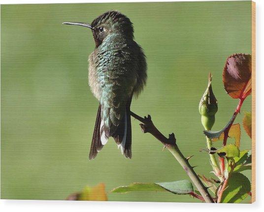 Hummingbird Visits At Sunrise Wood Print