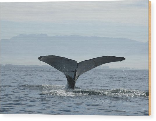 Humpback Whale Tail 3 Wood Print