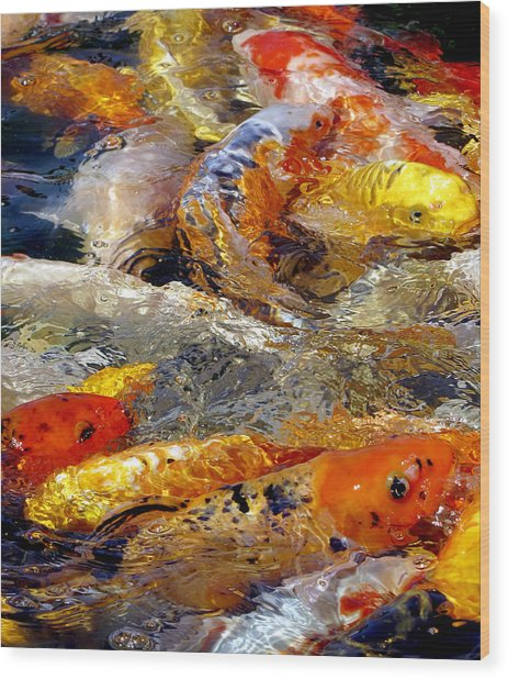 Hungry Koi Wood Print
