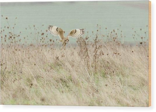 Hunting Short Eared Owl Wood Print