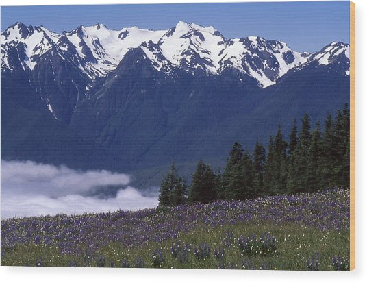 Hurricane Ridge Wood Print