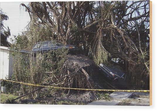 Hurricane Wilma Revenge In Pompano Beach  Wood Print