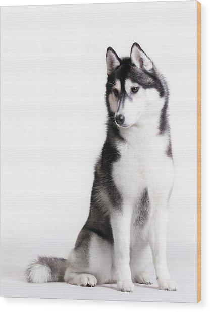Husky On White Wood Print by JanekWD