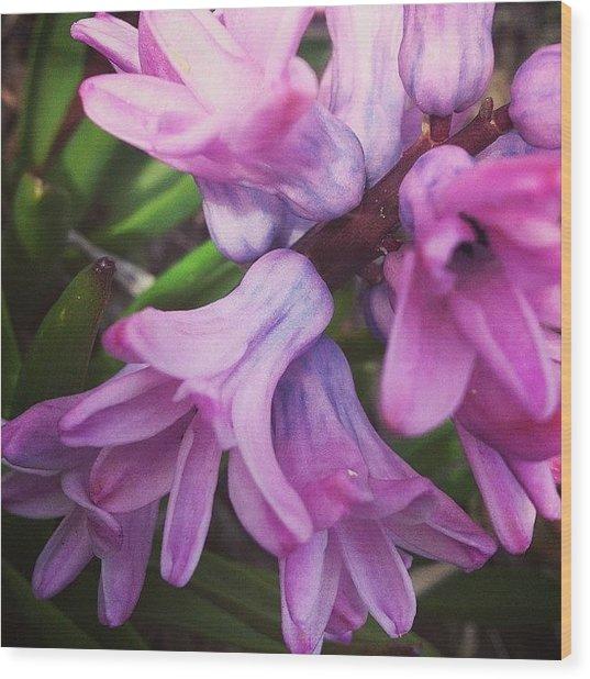 Hyacinth Flower Wood Print
