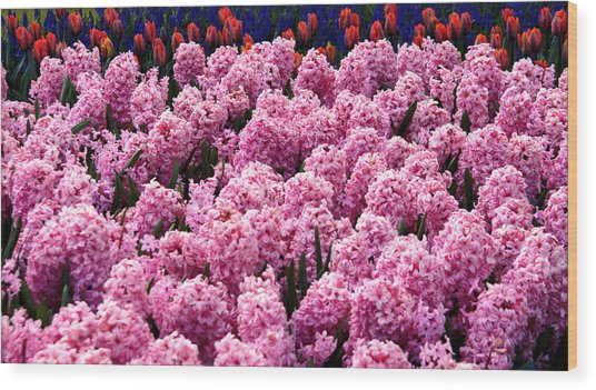 Hyacinth's In Amsterdam Wood Print