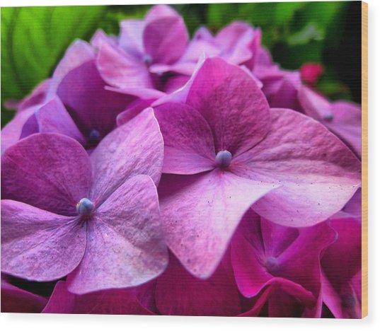 Hydrangea Bliss Wood Print