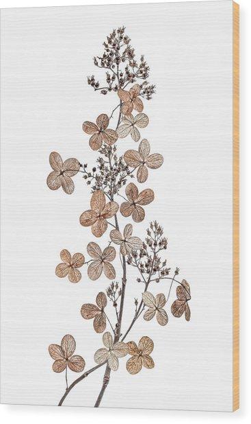 Hydrangea Paniculata Wood Print
