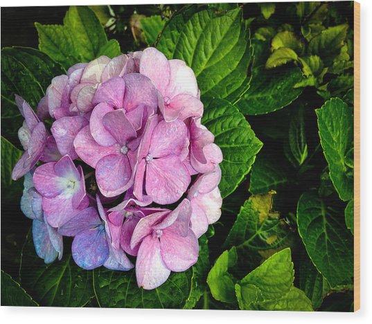 Hydrangea Singapore Flower Wood Print by Donald Chen
