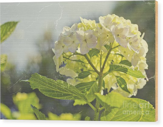 Hydrangea With Tattered Grey Vintage Texture Wood Print