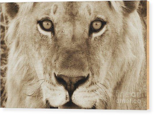 Hypno Lion Wood Print