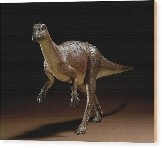 Hypsilophodon Dinosaur Model Wood Print by Natural History Museum, London/science Photo Library