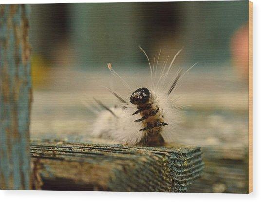 I Am A Caterpillar Wood Print