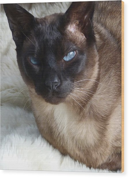 I Am A Tonkinese Wood Print