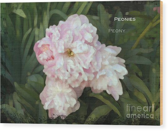 I Cry For You My Peonies Wood Print
