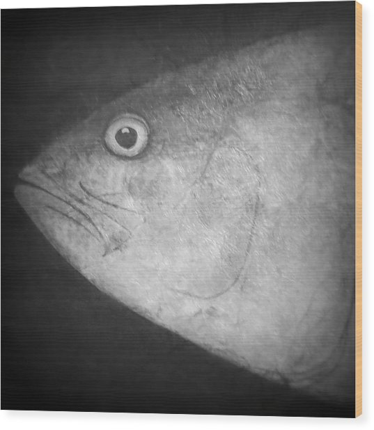 I See You - Fish Wood Print by Patricia Januszkiewicz