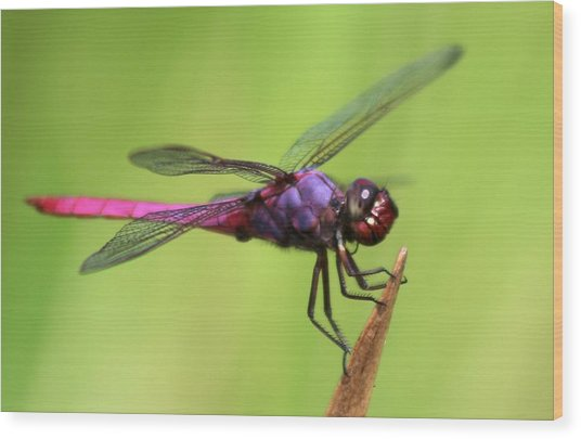 Dragonfly - I See You Wood Print