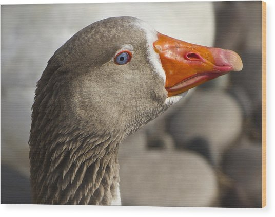 I See You - Pomerianian Goose Wood Print