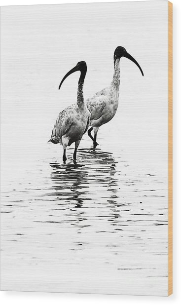 Ibis Wood Print by David Benson