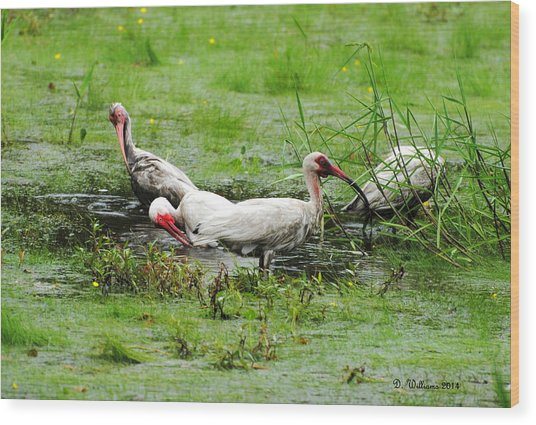Ibis In Willow Pond Wood Print