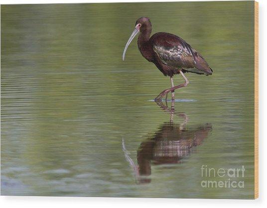 Ibis Reflection Wood Print