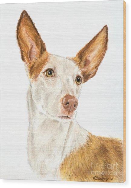 Ibizan Hound In Pastel Wood Print