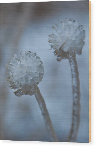 Ice-covered Winter Flowers With Blue Background Wood Print