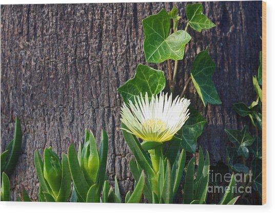 Ice Flower With Vine Wood Print