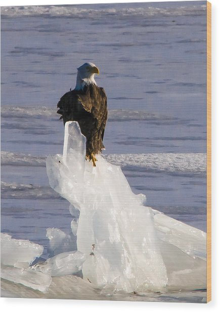 Ice King Wood Print