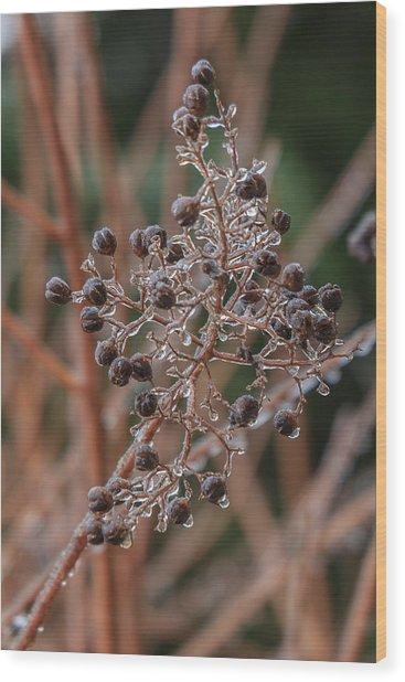Ice On Berries Wood Print