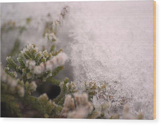 Ice Prison Wood Print by Dave Woodbridge